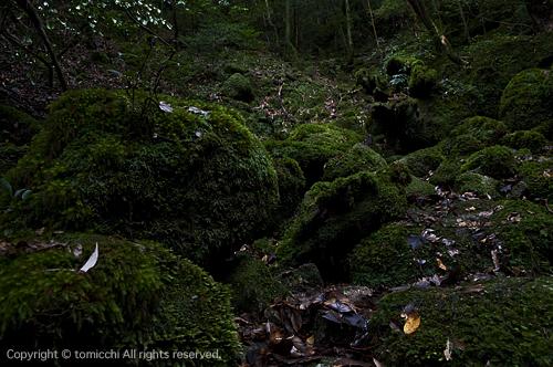 yakushima3-6.jpg