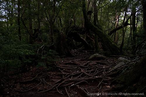 yakushima4-4.jpg