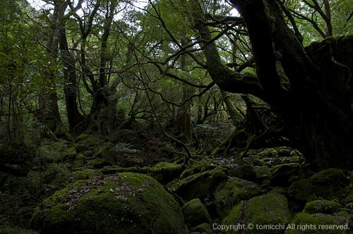 yakushima4-9.jpg