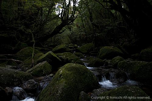 yakushima5-1.jpg