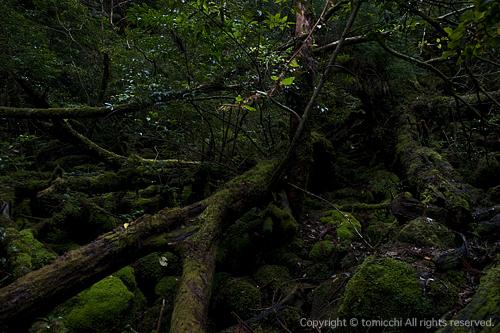 yakushima4-3.jpg